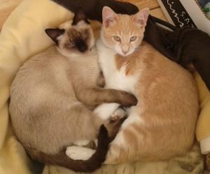 Lio&Lucia